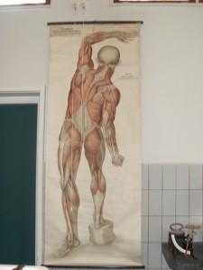 Lesmateriaal anatomie. (Foto Monique Huizer)